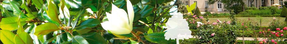 bandeau fleur pépiniere ripoche loire atlantique
