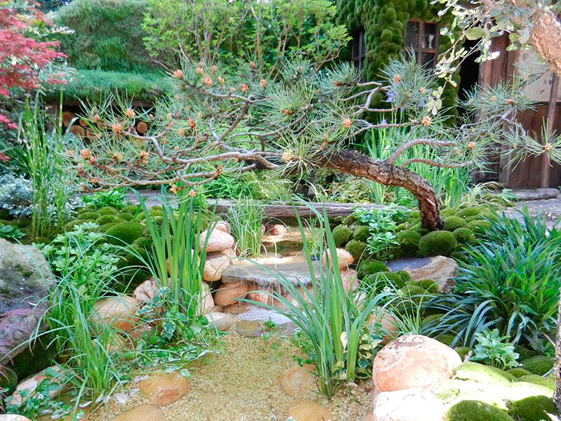 Fleurs arbustes lanterne chinoise pour des jardins japonais for Idee jardin basse goulaine