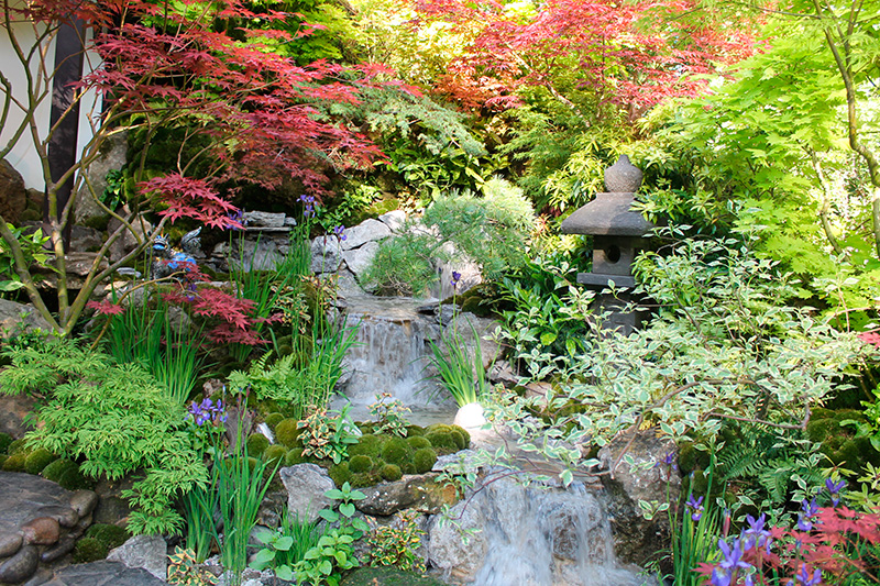 fleurs arbustes lanterne chinoise pour des jardins japonais